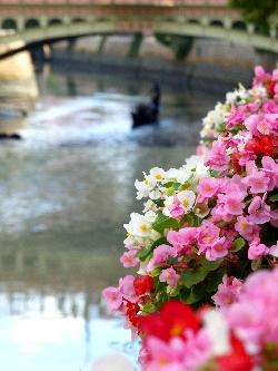 make_flowers